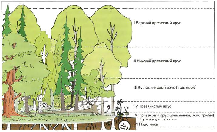 Группы растений и их виды таблица